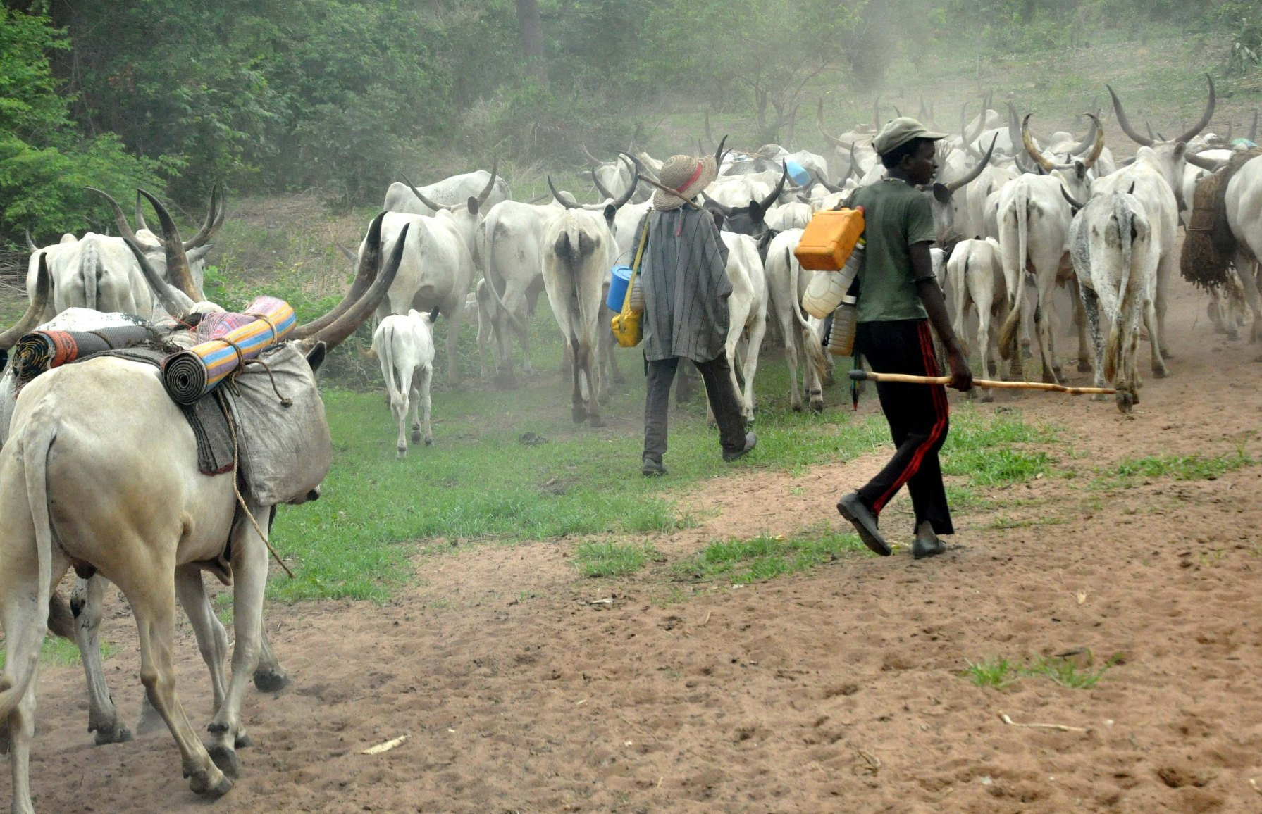 , Fulani Herdsmen Take Oyo Govt, Oyo Assembly To Court Over Anti-grazing Law, NAIJAPARRY, NAIJAPARRY